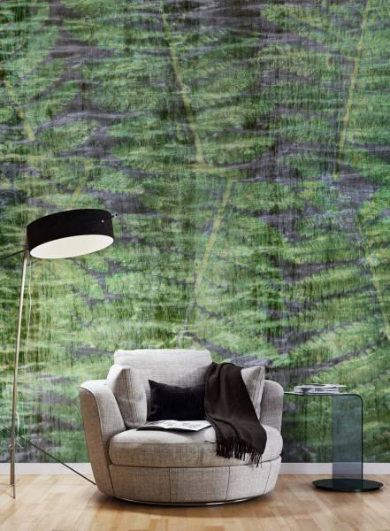 Ferns - wallpaper